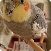 Adopt A Pet :: Willy - Aurora, IL