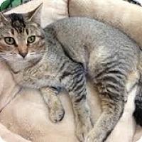 Adopt A Pet :: Sarah - Modesto, CA