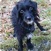 Adopt A Pet :: Rosie - Mocksville, NC