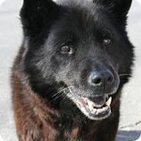 Adopt A Pet :: Michael - Canoga Park, CA