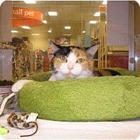 Adopt A Pet :: Lily - Woodstock, GA