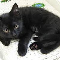 Adopt A Pet :: Cheyanne - Lancaster, MA