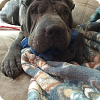 Adopt A Pet :: Phoebe in OK - adopt pending - Mira Loma, CA