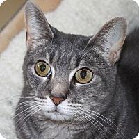 Adopt A Pet :: Brie - North Branford, CT