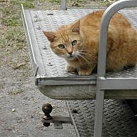 Adopt A Pet :: Dougie - Naples, FL