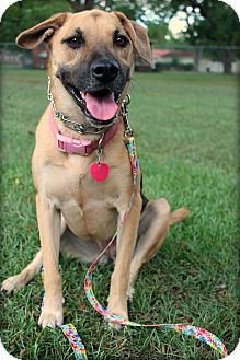German Shepherd Dog/Labrador Retriever Mix Dog for adoption in Macon, Georgia - Athena