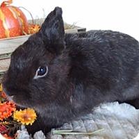 Adopt A Pet :: Ariel - Paramount, CA