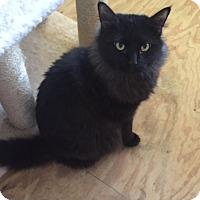 Adopt A Pet :: Jinx - Elyria, OH