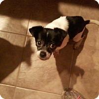 Adopt A Pet :: Sadie - Wrightsville, PA