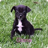 Adopt A Pet :: Gloria - Concord, CA