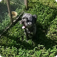 Adopt A Pet :: Ferguson - Pleasanton, CA