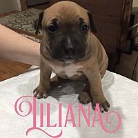 Adopt A Pet :: Liliana - Cheney, KS