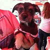 Adopt A Pet :: Roxy - North Hollywood, CA