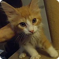 Adopt A Pet :: Gabe - Jacksonville, FL
