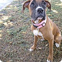 Adopt A Pet :: Princess - Scottsdale, AZ