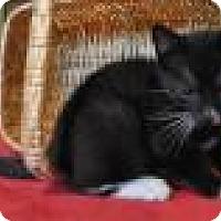 Adopt A Pet :: Carolina - Port Republic, MD