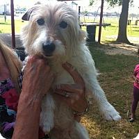 Adopt A Pet :: Minnie in Houston - Houston, TX