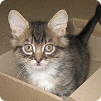 Adopt A Pet :: Fleece - North Highlands, CA