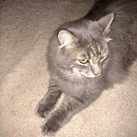 Adopt A Pet :: Bailey - Covington, PA
