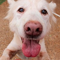 Adopt A Pet :: Blondie - Memphis, TN