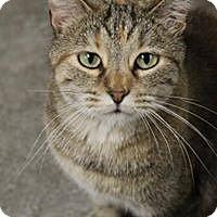 Adopt A Pet :: Jinx - Larned, KS