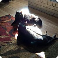Adopt A Pet :: Francine & Bruno - Austin, TX