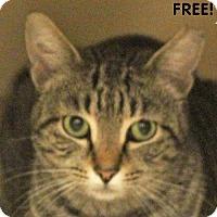 Adopt A Pet :: Cookie - Walnut Creek, CA