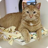 Adopt A Pet :: Elvis - Rochester, MN