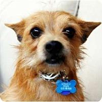 Adopt A Pet :: HARRY - Van Nuys, CA