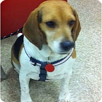 Adopt A Pet :: SADIE - Minnetonka, MN
