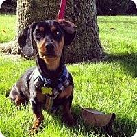 Adopt A Pet :: Sabastian AKA Sparky - San Jose, CA