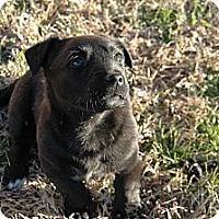 Adopt A Pet :: Cheryl Ladd - Plano, TX