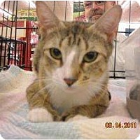 Adopt A Pet :: Jasmine - Riverside, RI