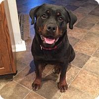 Adopt A Pet :: Mia - Frederick, PA