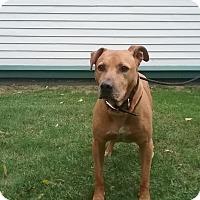 Adopt A Pet :: Trooper - Shelter Island, NY