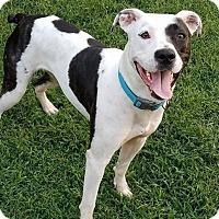 Adopt A Pet :: Star - Waxhaw, NC