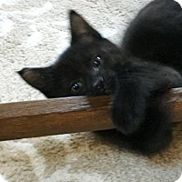 Adopt A Pet :: David - Westwood, NJ