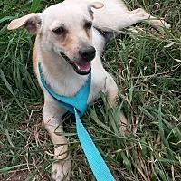 Adopt A Pet :: Arnie - East Hartford, CT