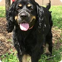 Adopt A Pet :: Langley - Sugarland, TX