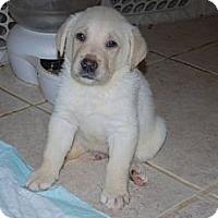 Adopt A Pet :: Chauncey - Minneola, FL
