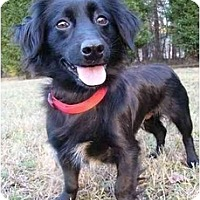 Adopt A Pet :: Laura - Mocksville, NC