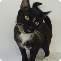 Adopt A Pet :: Posey - Hamburg, NY