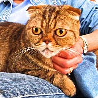 Adopt A Pet :: Merrie - Davis, CA