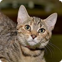 Adopt A Pet :: Daria - Medina, OH