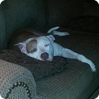 Adopt A Pet :: Dutchess - Manhasset, NY