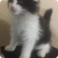 Adopt A Pet :: Nestle - Dallas, TX