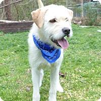 Adopt A Pet :: Chip - Mocksville, NC