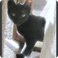 Adopt A Pet :: Tippin - Gilbert, AZ