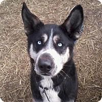 Adopt A Pet :: Sedrick - Harvard, IL