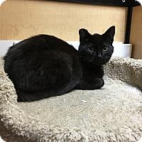 Adopt A Pet :: Storm - Riverside, CA